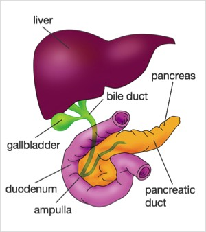 Gallstones diagnosis and treatment faq the london gallstone clinic gallstones faq frequently asked questions ccuart Images